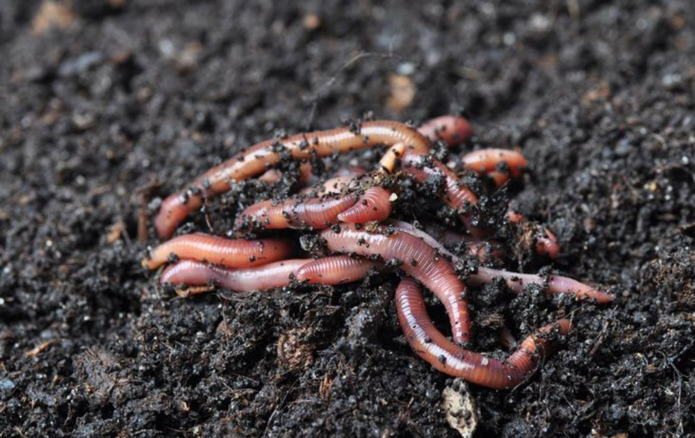 A host of worms in the soil.