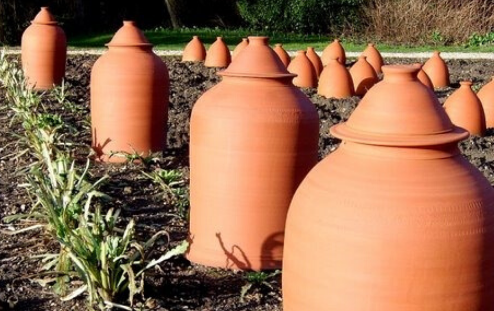 Terracotta forcing pots in the garden.