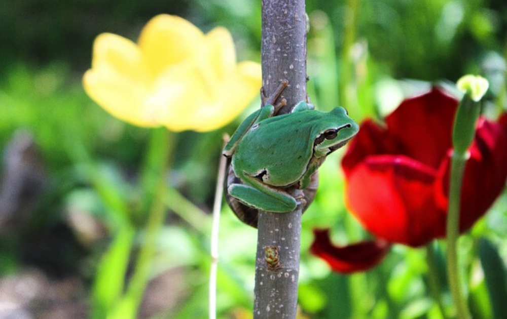A green toad in a flower stalk.