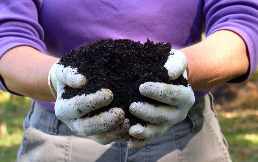 A gardener with compost in his hands.