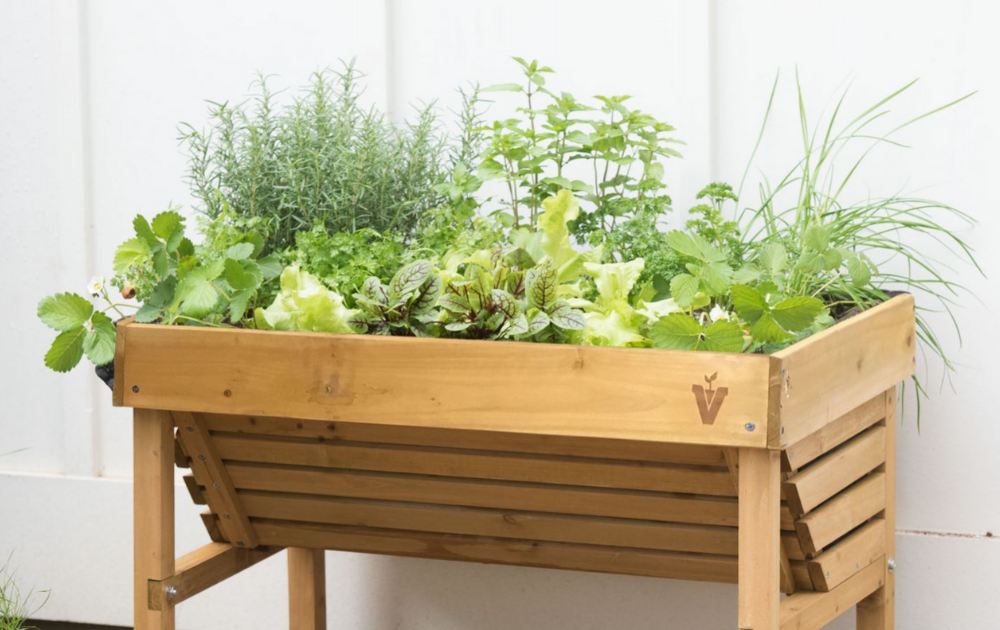 Herbs and vegetables in a recycled wood raised bed.