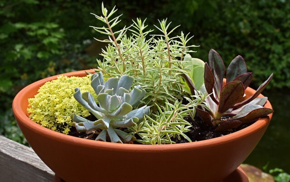 A terracotta dish filled with succulents.
