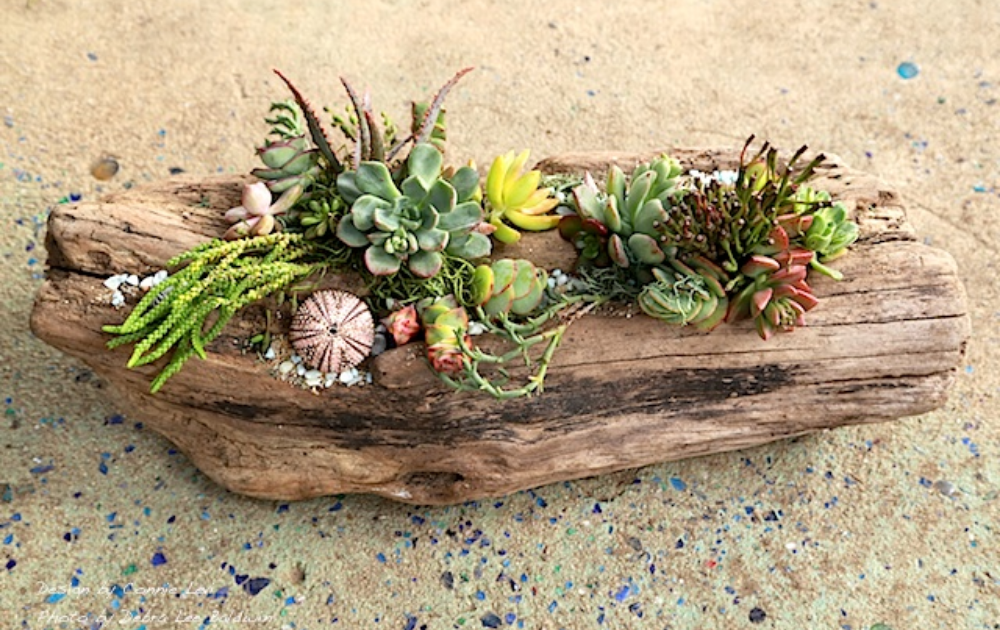 A few types of colorful succulents growing in driftwood.