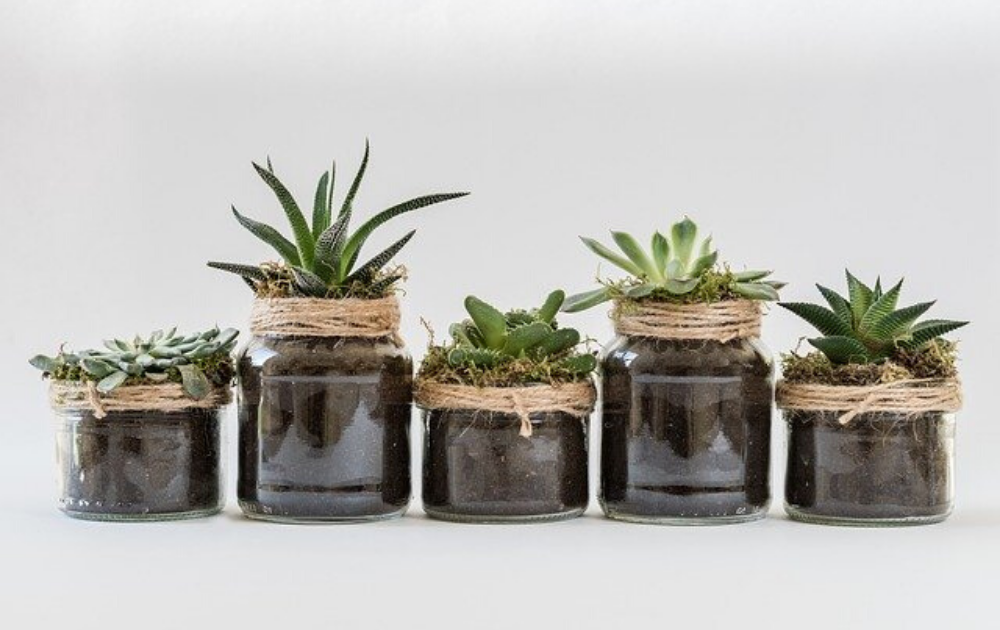 Five pieces of succulents each planted in a glass jar.