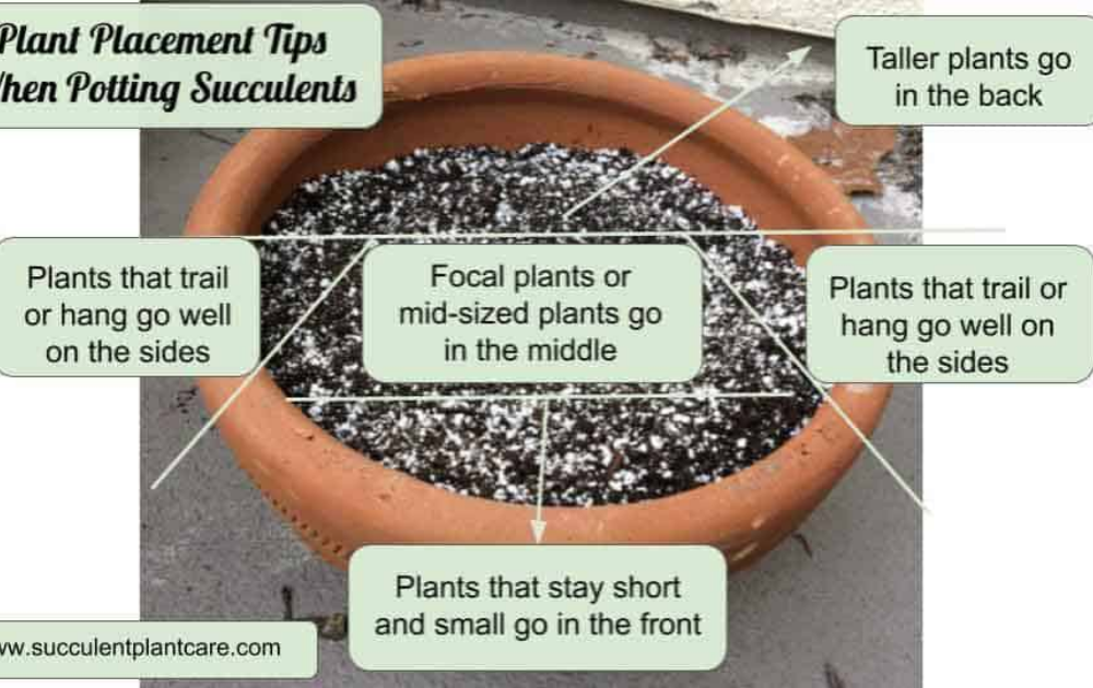 A terracotta pot filled with potting mix.