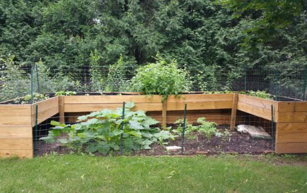The U shape wooden raised bed merge with a traditional garden.