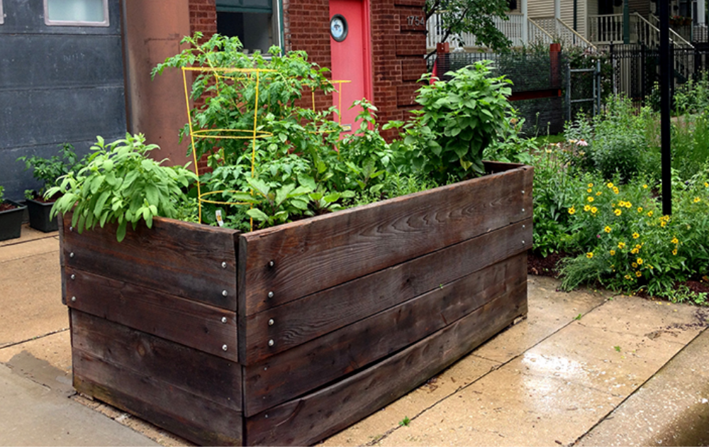 Rustic wooden raised bed with growing vegetables.