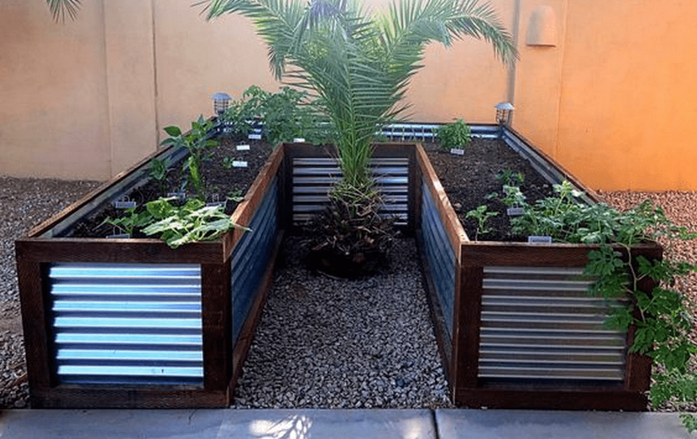 Corrugated galvanized steel raised bed with wooden frame in U shape.