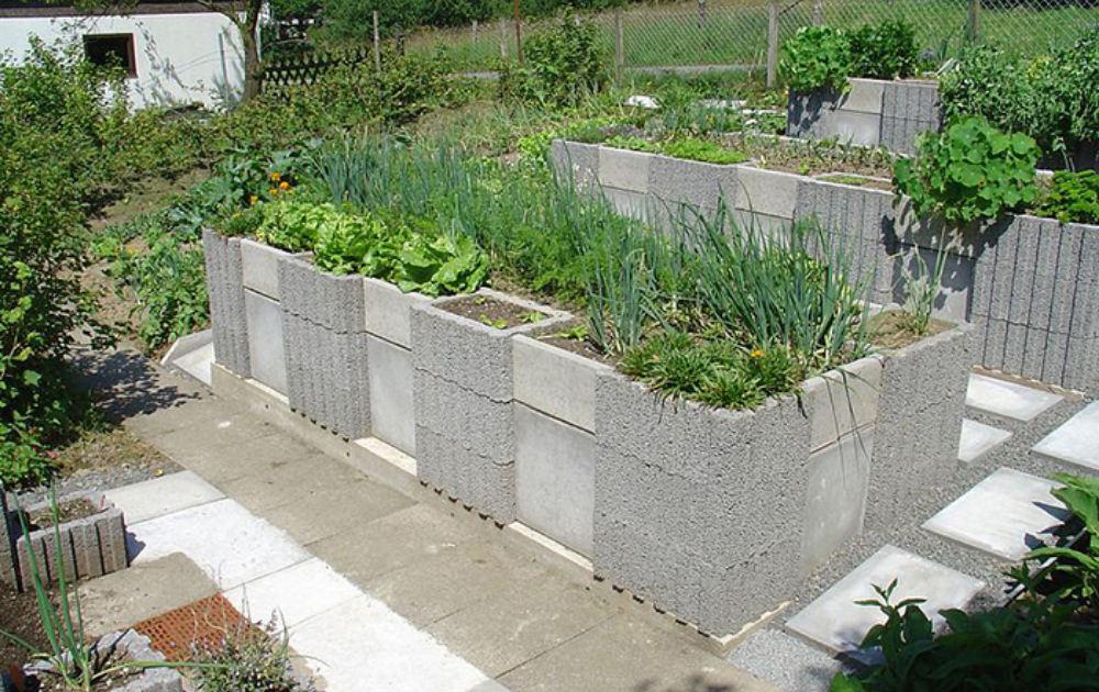 High built raised bed built out of cinder blocks with growing onions and lettuce.