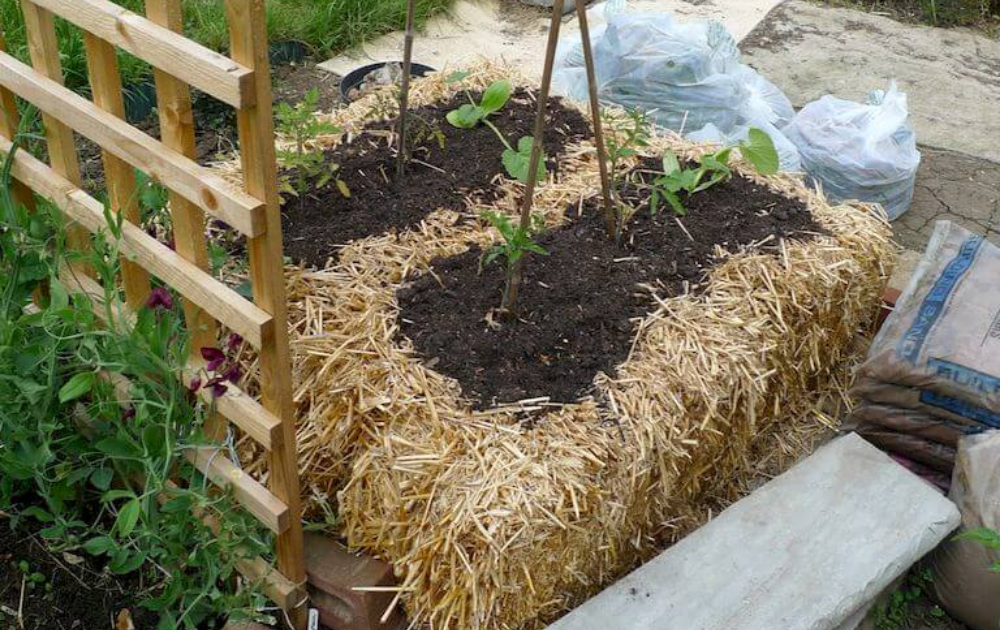Two small straw bales raised beds with growing plants a trellis