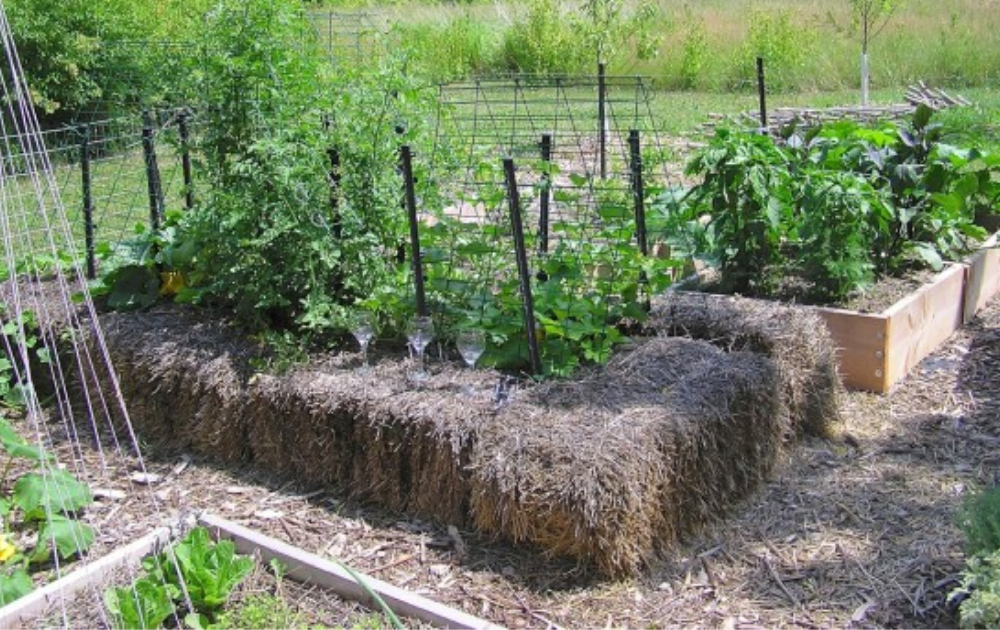 No soil straw bale raised bed with three drinking glasses on the top.