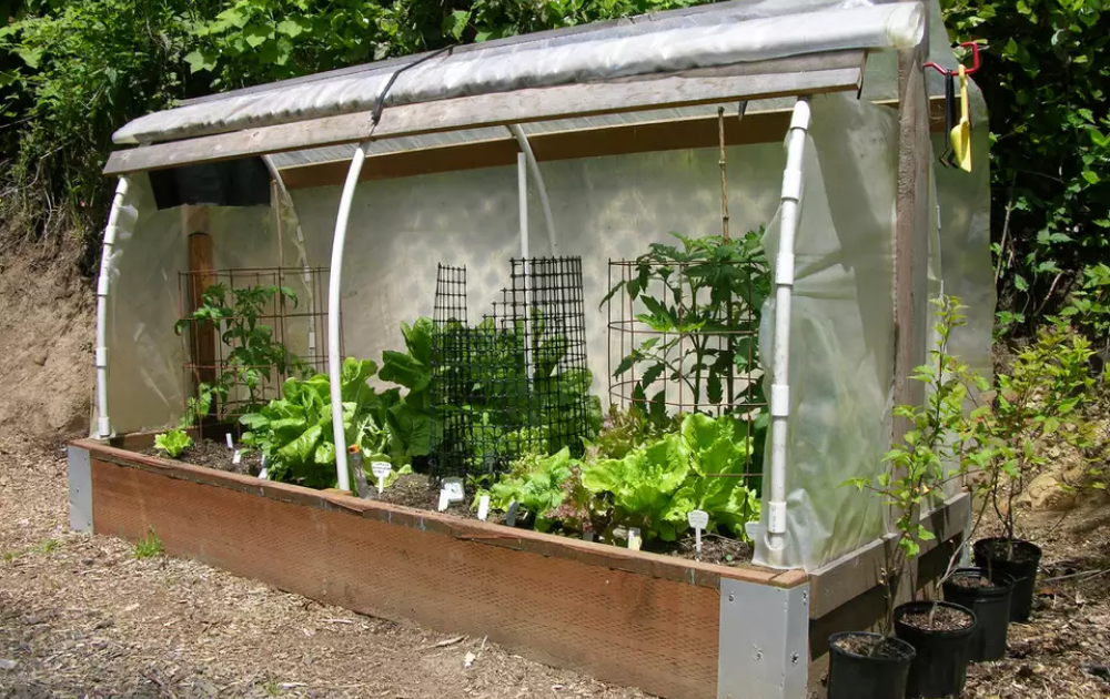 Wooden raised bed with a hoop house