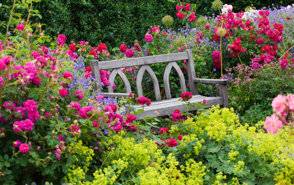 Wooden rustic bench place at the center of colorful flowering roses.