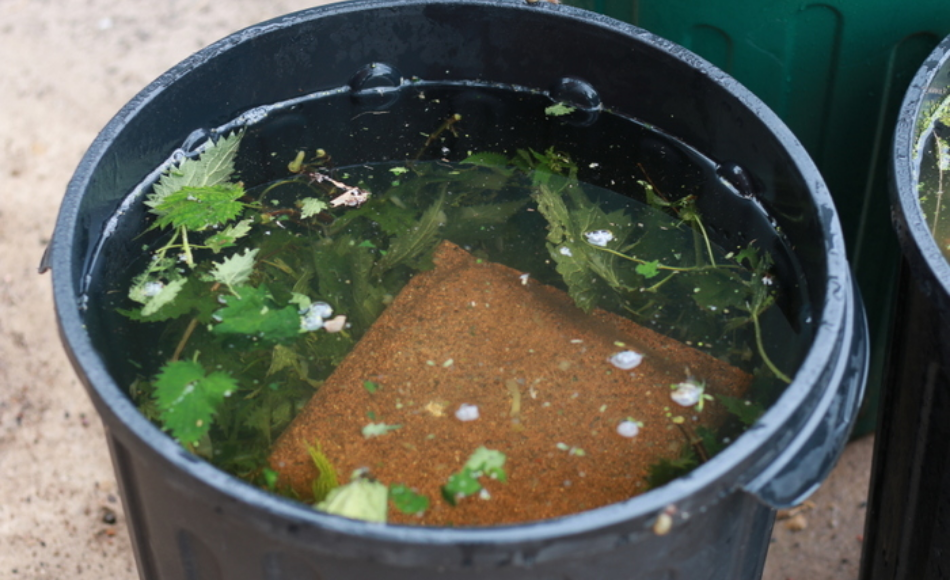 A black 5-gallon bucket filled with weeds weighed down by bricks covered with water.