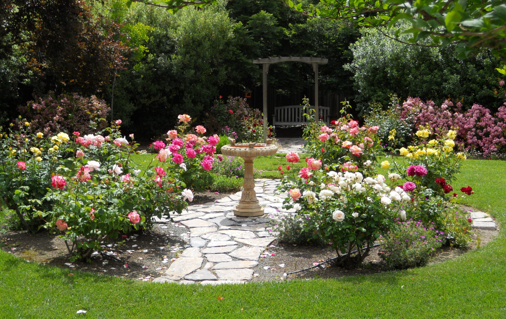 Roses in colorful blooms with a concrete birdbath at the center of the garden.