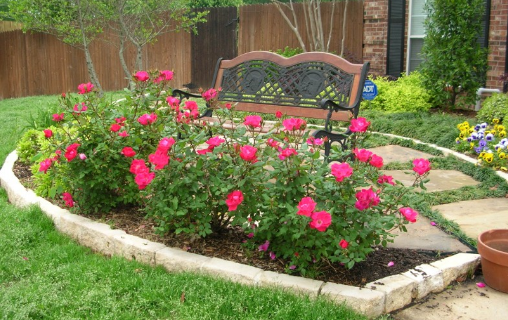 An iron bench beside a blooming red rose garden bed.