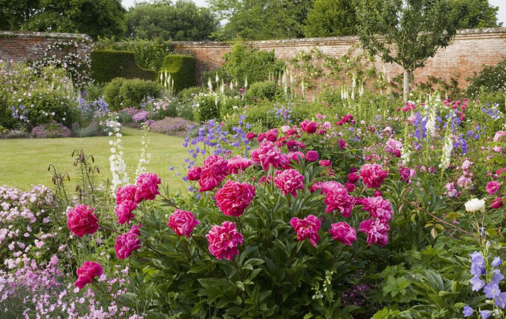 A spacious garden with pink blooming roses and other flowering plants.