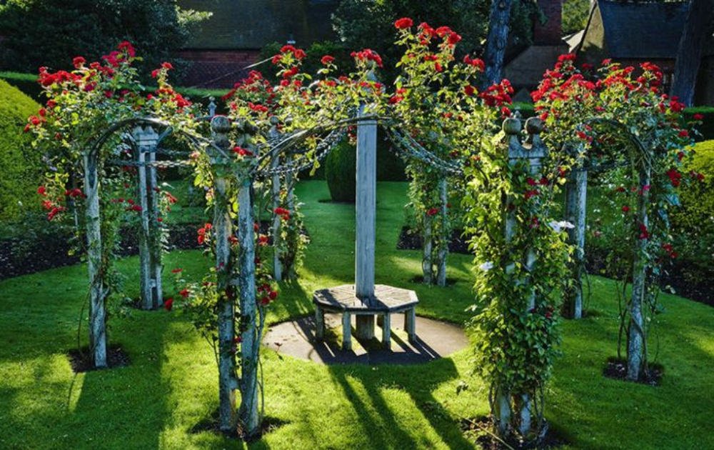 Red climbing roses among a wooden arbor.