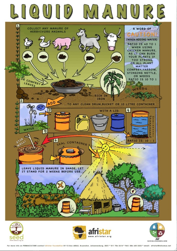 An infographic about the making of the natural plant food manure tea.