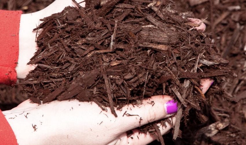 Brown mulch in a girl's hand