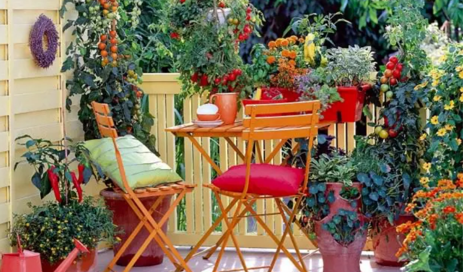 The roof garden features productive tomatoes and peppers in plastic containers and vertical PVC planters. It also has a coffee table with colourful cups and saucer along with throw pillows.
