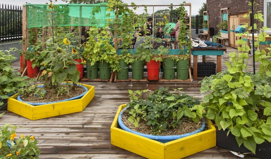 The rooftop garden features wood flooring that is full of plants in plastic colourful buckets and basins with trellises. Planters have yellow wooden buffer to protect the roofing materials.