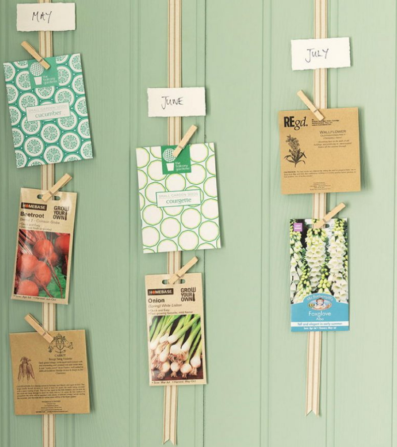 Packets of seeds clipped on the ribbon that is attached to the wall.