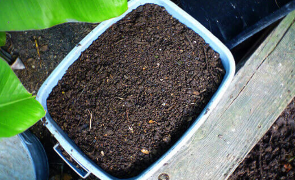 Cured compost in a blue plastic rectangular container.