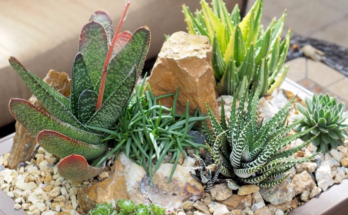 Various types of succulents arranged beautifully in a rectangular plastic container.