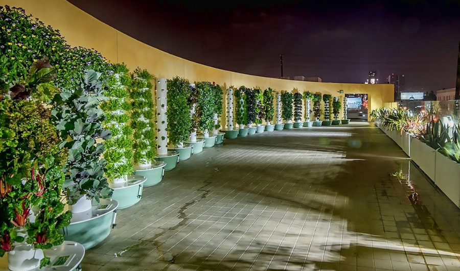 The spacious roof garden showcases 22 sets of the vertical hydroponic garden using PVC planters to doll up the wall.