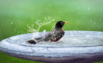 Bird swimming on an oval concrete birdbath.