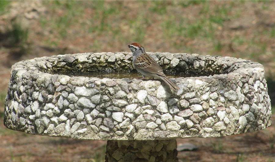 A bird perches on the oval concrete birdbath.
