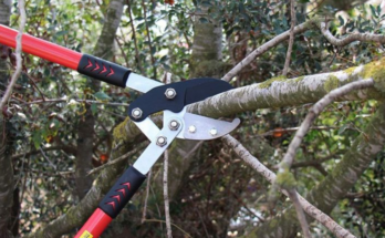 Long-handled lopper in black and red colour, cutting a branch.