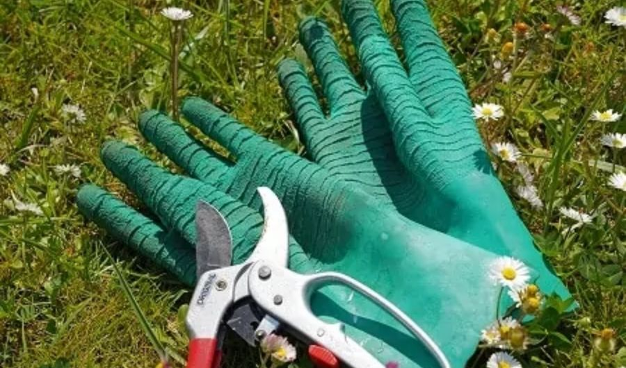 Pair of green rubber gloves and bypass pruner placed in the garden.