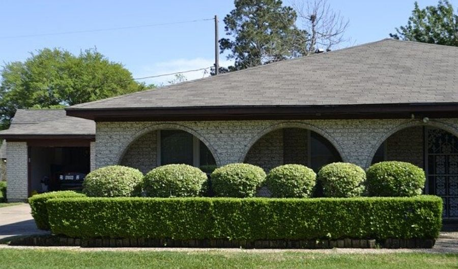 Tidy and neat formal hedge with round and rectangular shape in front of the house.