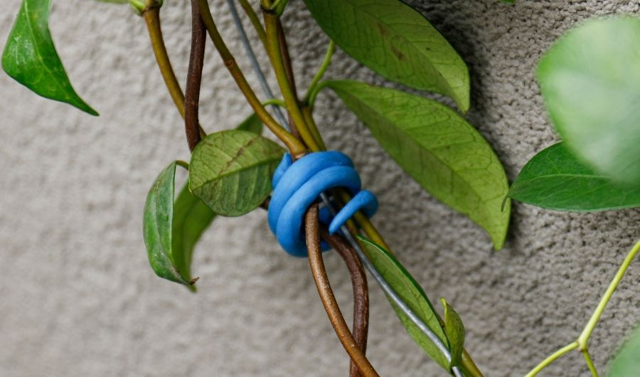 Sugru in color blue molded as plant tie.