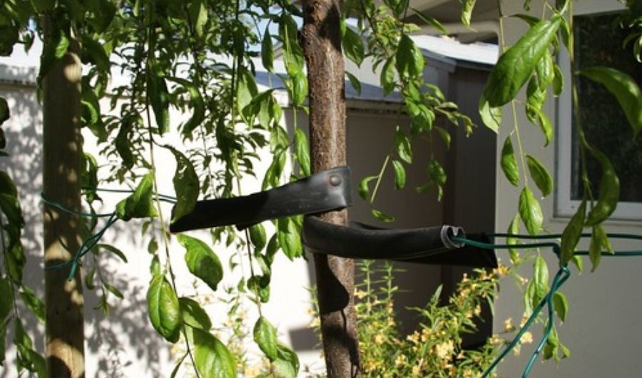 Bicycle inner tube with electrical wire used to loop around the young tree.