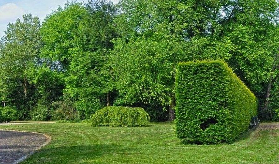 A hedge in a rectangular layout used to divide areas in the formal garden.