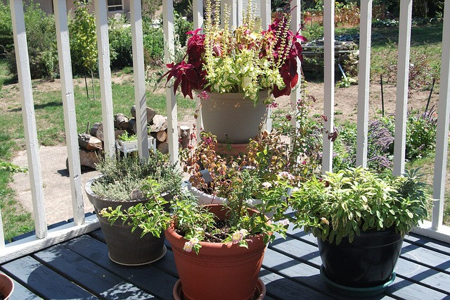 Flowering plants and herbs in plastic planters, position on the side corner of the balcony deck.