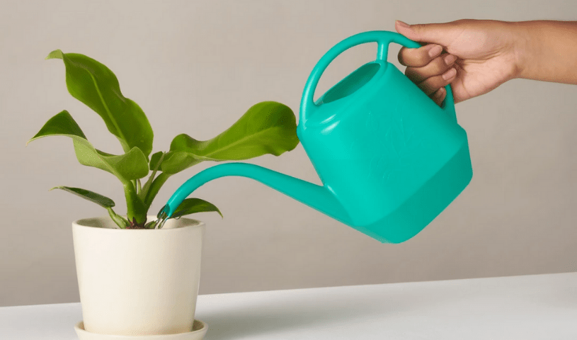 Watering a houseplant with a green plastic watering can.