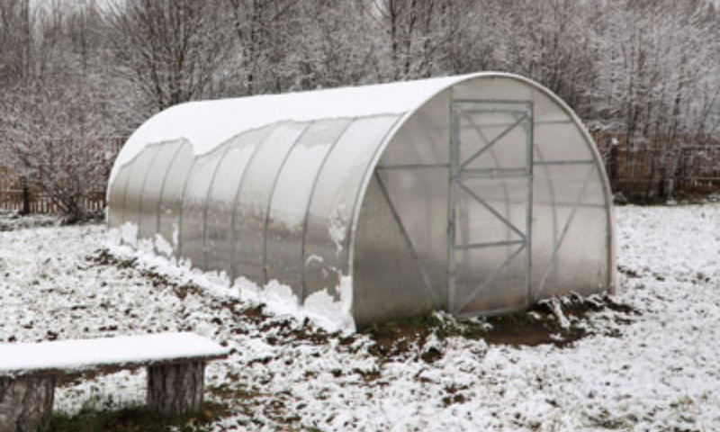 Unheated greenhouse in mild winter