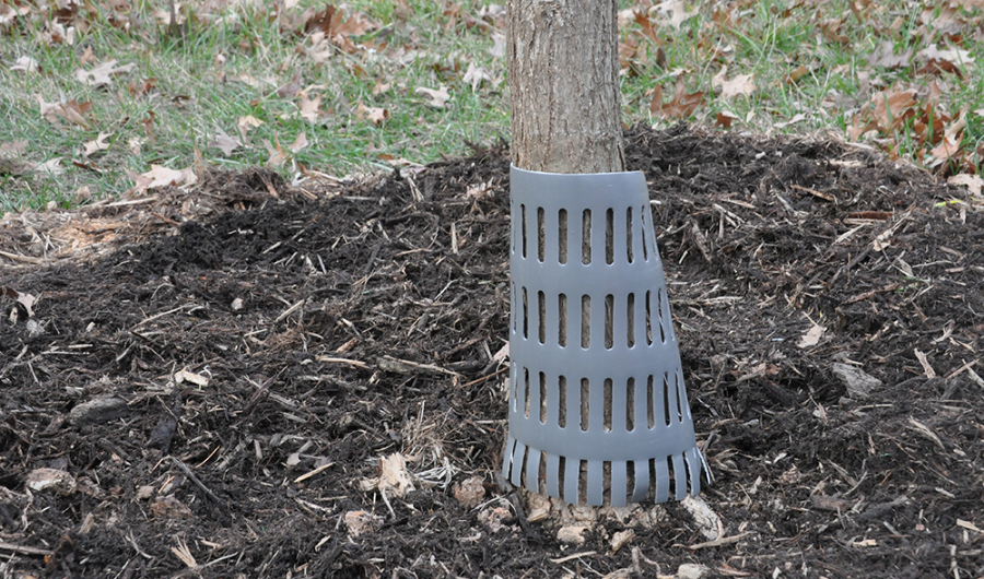 Grey plastic tree protector encircling a tree trunk.