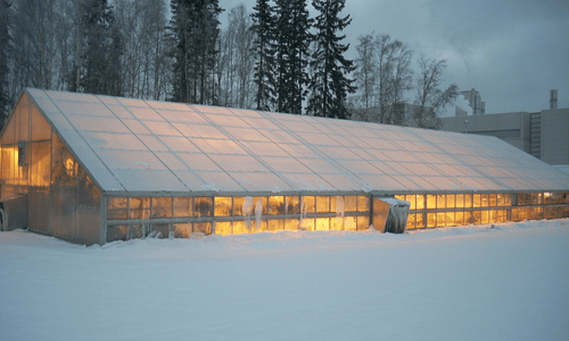 Heated greenhouse in winter.