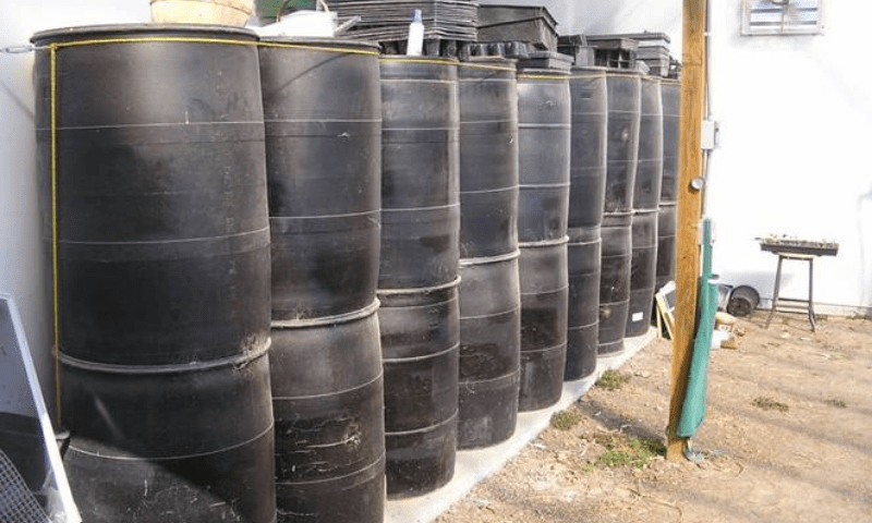 18 pcs black 55-gallon plastic drums inside a greenhouse