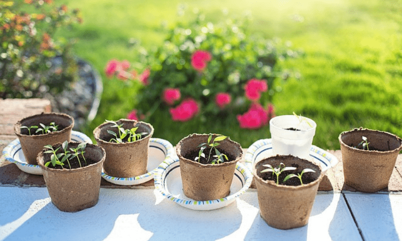 Six recyclable medium size containers and one plastic pot, growing about three to four seedlings each.