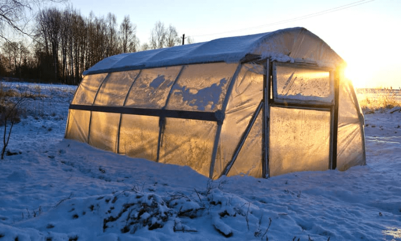 Winter greenhouse with snow.