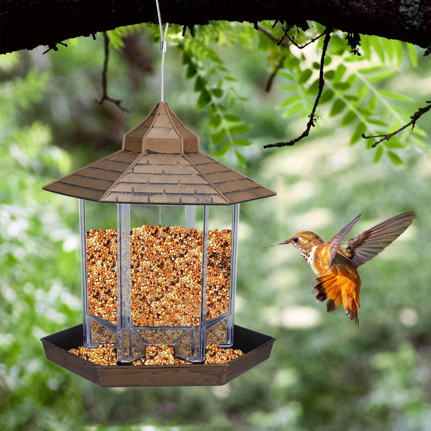 Plastic bird feeder hanging on the tree