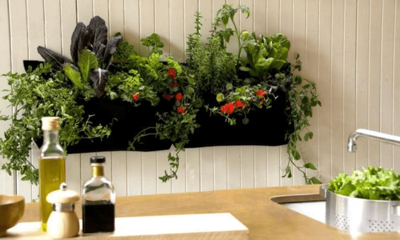 A vertical salad garden hangs on the kitchen wall.