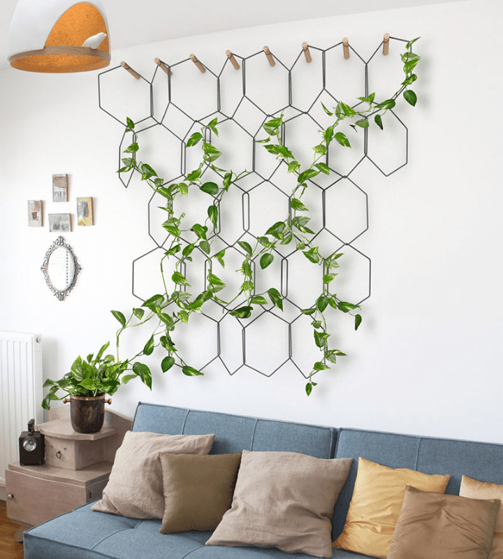 Honeycombs structure on the wall with climbing vines above the couch