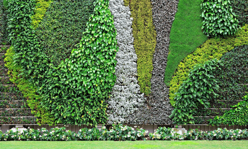 A living wall demonstrates artwork features with various plant textures.